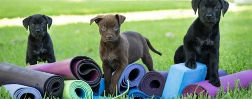 Puppy Yoga @ Irsay Family YMCA at CityWay | Indianapolis | Indiana | United States