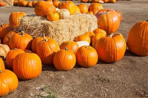 Pumpkin Smashing @ Baxter YMCA | Indianapolis | Indiana | United States